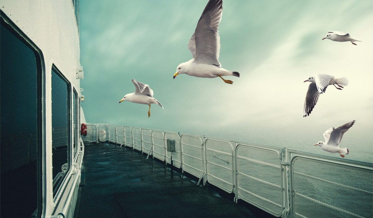 seagulls, flying, ship